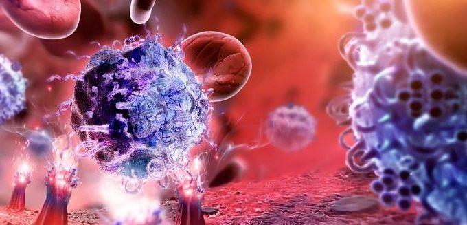 Работа иммунной системы человека