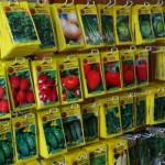 Как выбирать семена при покупке