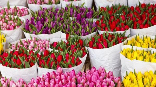 Как выбрать свежие розы или тюльпаны