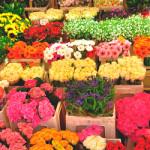 Как выбрать свежие розы или тюльпаны при покупке