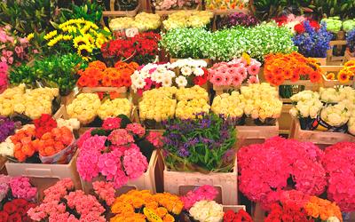 Как выбрать цветы
