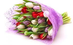 Выбираем тюльпаны