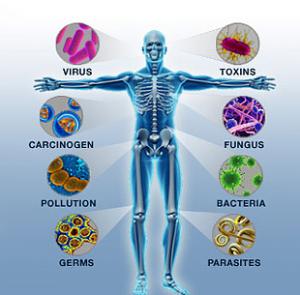 Особенности работы иммунной системы