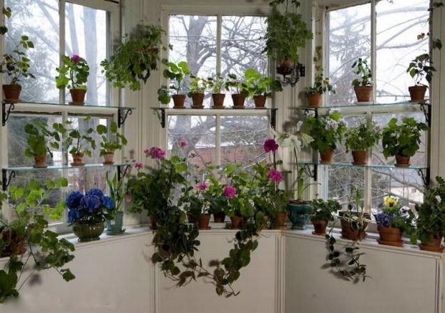 Самые полезные комнатные растения для дома и здоровья