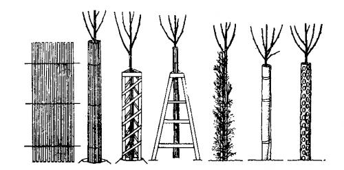 Способы защиты деревьев от грызунов