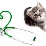 Правда ли, что кошки лечат болезни людей массажем?