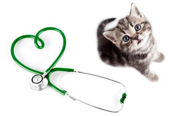 Какие кошки лечат людей