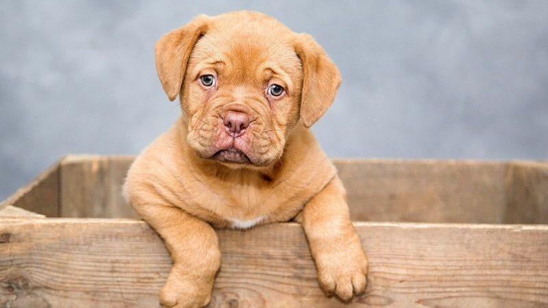 Основные ошибки в воспитании щенка